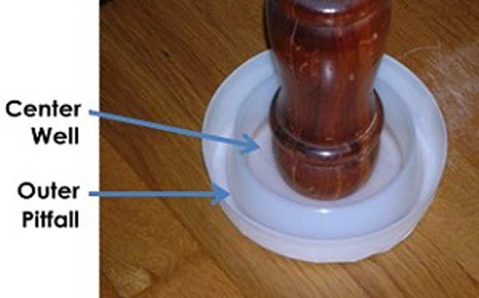 bed bug interceptor climp up and cup