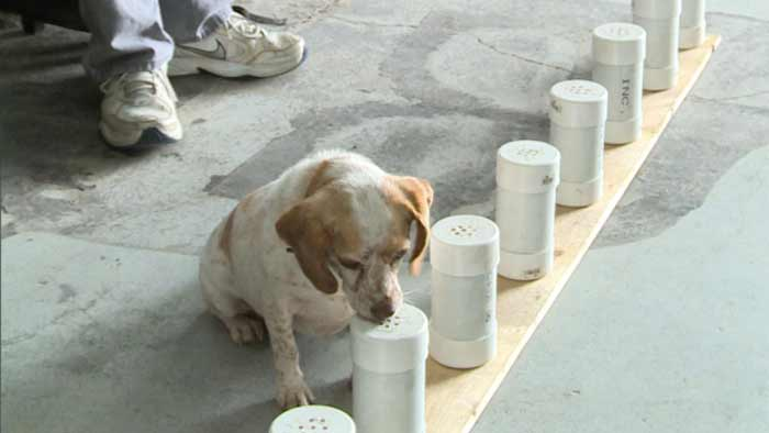 bed bug sniffing dogs training and cost