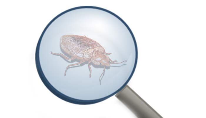 How to Kill/Get Rid of Bed Bugs Fast Yourself Naturally for Good