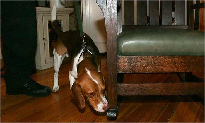 How Much Are Bed Bug Sniffing Dogs