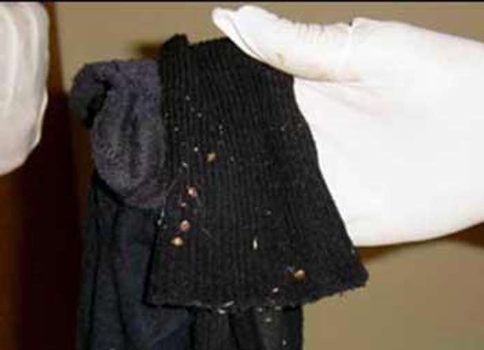 bed bugs on clothes pictures