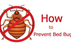 Bed Bugs Control And Treatment Information