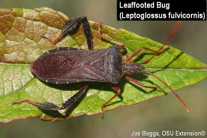 Stink bug look alikes