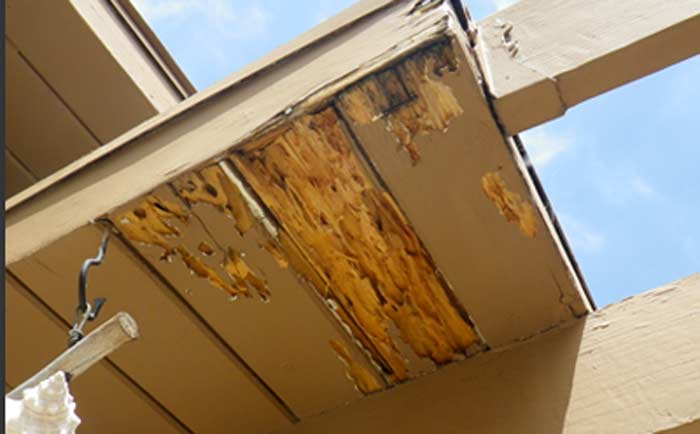 Destruction damage from drywood termite