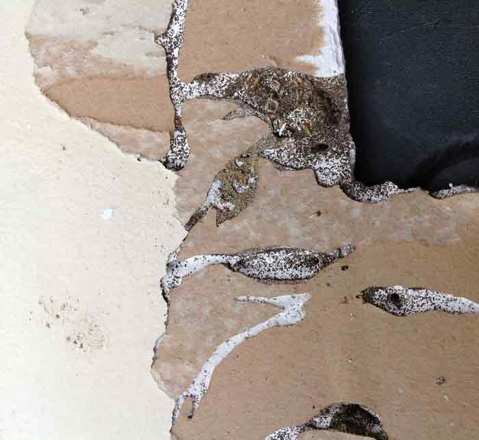 termite damage drywall picture