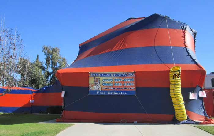 termite tenting Cost Preparation u0026 risks & Termite Tenting u0026 Fumigation- Cost Preparation Safety u0026 Cleaning ...