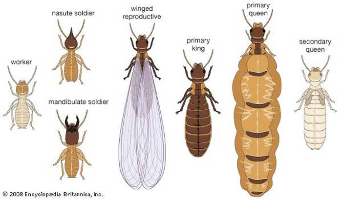 Termite Inspection Cost Procedure How Long It Takes Training Pestbugs