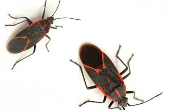 Precise Guide To Get Rid Of Destructive Insects Indentify Treat